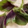 新鲜有机蔬菜绿色无公害花红苋菜圆叶红苋菜家庭阳台菜园盆栽