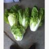 河北保鲜蔬菜出口加工厂