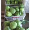 北京椰菜出口加工厂 青岛卷心菜 莱西小包菜出口加工厂 举报