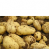 2015年承德围场新土豆 胡萝卜代购代收