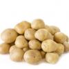 马铃薯 土豆大量上市河北承德围场新土豆 马铃薯大批量上市