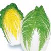 供应良乡新鲜大白菜 优质绿色无公害蔬菜