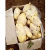 山东肥城荷兰十五土豆,马铃薯通货土豆大量供应