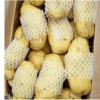 荷兰十五通货 土豆山东肥城大量供应马铃薯