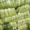 北京新三号大白菜净菜 山东大白菜,肥城北京三号白菜大量供应中