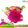 越南红心火龙果2个(大果)410g以上/个 进口新鲜水果 一件代发包邮