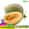 【易果生鲜】海南西州蜜瓜1个1.5kg以上/个 新鲜水果一件代发包邮