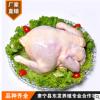 直销 冷冻白条鸡 整箱批发 白条老母鸡厂家直销 放心鸡肉