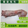 大量批发供应冷冻去骨兔背肉绿色有机食品生态散养