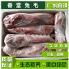 活杀冷冻新鲜宰杀兔头兔肉肉质细嫩精心挑选自然鲜美