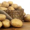 农家 土豆 马铃薯