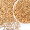 原阳县种植销售高质量的小麦