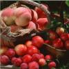 生产批发销售各种瓜果蔬菜