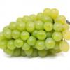 醉金香葡萄直销 优质新品种 葡萄果树苗 现货优惠