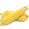 【东北特产】 专供前年饲料粮 东北玉米 国标4级玉米 接收预定
