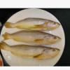 大西洋黄鱼 超市大黄鱼批发 超市饭店原食材