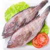 印度石斑鱼批发 冷冻石斑鱼海产品供应 海鲜产品黑猫鱼批发