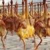 茅山特产年货三黄鸡 农家野生放养自制腊肉 咸货鸡鸭鹅鱼手工腌制