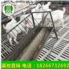 奶山羊配种的奶山羊3个月奶羊奶山羊种羊5个月奶羊山东奶山羊种公