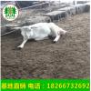 日产十斤奶山羊 奶山羊的饲养管理方法 莎能奶山羊价格
