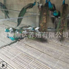 一年的孔雀多少钱一只 哪里有卖的 孔雀苗的价格行情孔雀好养殖吗