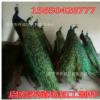 哪里有出售孔雀标本的 一架孔雀标本多少钱 优质活体孔雀制作