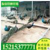 孔雀价格 孔雀去哪买振豪特种养殖常年供应人工养殖蓝孔雀