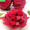 【5斤空运包邮】台湾蜜宝金都1号红心火龙果精品大果果园包邮一件