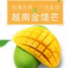现货越南青芒8斤新鲜水果青皮越南芒果批发 大青芒一件代发