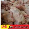新鲜鸽子肉乳鸽单只7到8两 可做脆皮乳鸽 活体鸽子现杀