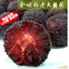 杨梅基地批发 正宗荸荠种精品杨梅鲜果 当季现摘杨梅 汁多味甜