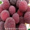 仙居杨梅 供应仙居特级荸荠杨梅 新鲜水果