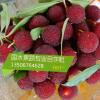 仙居东魁杨梅 供应特级礼盒东魁杨梅-----仙居县国水果蔬专业合作