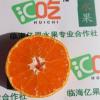 2A级正宗涌泉蜜桔 临海特产新鲜柑橘礼盒装现摘黄岩桔子一件代发