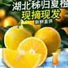 夏橙湖北秭归当季新鲜橙子水果5斤/10斤包邮批发 非伦晚脐橙