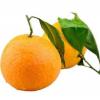 四川蒲江青见丑柑橘新鲜水果9斤随机包邮