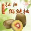 四川蒲江红心红阳猕猴桃 5斤装 新鲜水果 果园现摘现发 香甜多汁