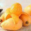 攀枝花米易枇杷 大五星 3斤装、5斤装 新鲜水果 现摘现发