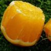 湖北秭归 伦晚脐橙 5斤装、9斤装 新鲜水果 现摘现发