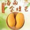 批发海南特产金煌芒果果园现发新鲜水果皮薄味美热带水果5斤装