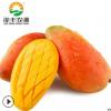 四川攀枝花热带当季早熟新鲜水果批发贵妃芒果非海南广西现摘包邮