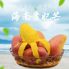 海南小贵妃芒果 新鲜水果红金龙5斤中果批发包邮非攀枝花芒果大青