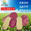 批发2018年大凉山新鲜现挖农家自种高淀粉红皮黄心马铃薯产地直销