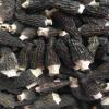 羊肚菌干货 种植羊肚菌 全剪柄 5-7cm大个头 精品质量 产地直销
