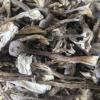 鹿茸菌菇 云南野生食用菌 鹿茸菇批发 产地直销 一手货源