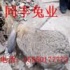 大兴安岭种兔多少钱一只免费传授养殖技术免费送货到家