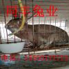 荆州兔子养殖回收送养殖设备签合同包回收