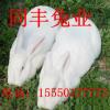 大兴安岭种兔养殖场送养殖设备签合同包回收