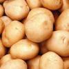 土豆 厂家生产加工各种规格精选 马铃薯 荷兰土豆 量大从优