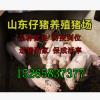 今日北京仔猪行情猪价格低品种好今日苗猪报价